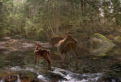 Fotobehang herten en hertenjong in stromende boskreek