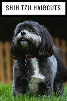Professional Pet & Dog Grooming (paid link) Want to know more, click on the image. #DogGrooming #PuppyGrooming Havanese Puppies, Shih Tzu Puppy, Dogs And Puppies, Shih Tzus, Doggies, Maltipoo, Bichon Frise, Dog Grooming Styles, Dog Grooming Supplies