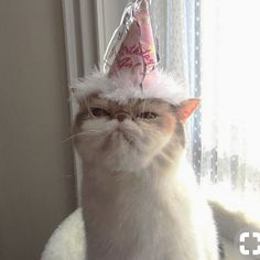 """unimpressed cats - - unimpressed cats kitties Maybe someone sang her the """"zoo"""" version of Happy Birthday Animals And Pets, Baby Animals, Funny Animals, Cute Animals, Crazy Cat Lady, Crazy Cats, Cool Cats, I Love Cats, Image Chat"""