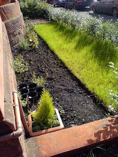 garden by hodgers