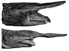 Goblin Sharks are the strangest deep sea sharks...