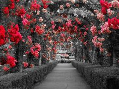 Beauty in shades of red