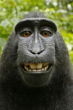 A cute monkey is smiling #funny #cute #monkey #smile #cuteanimals #TheWorldIsGreat