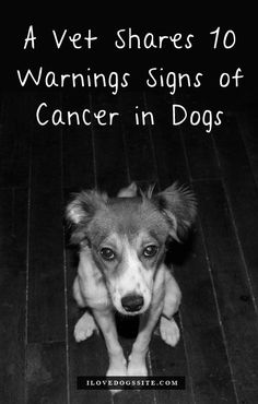 REPIN THIS! It might save your dog's life. Every dog owner needs to know these 10 signs of Dog Cancer. I hope I never need this.