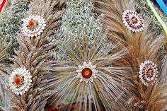 Znalezione obrazy dla zapytania korony dożynkowe galeria Dandelion, Flowers, Plants, Google, Dandelions, Florals, Planters, Taraxacum Officinale, Plant