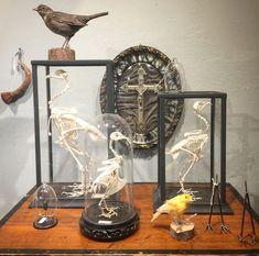 #hartwarebygeesje Kleine handgemaakte vitrinekastjes met skeletjes van kip of duif. Een merel, een kanarie en meer unieke objecten om jouw interieur speciaal te maken. 😍 #Enschede #Haverstraatpassage