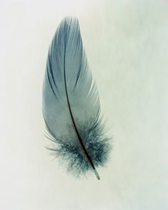 This watercolour of a beautiful feather looks as soft as the real deal and lighter than a whisper.