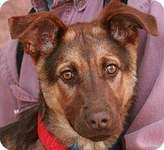 Annie - Doberman Pinscher mix - Born: 7/7/2013 - Palmdale, CA - Halfway to Home -   http://www.halfwaytohome.net  http://www.adoptapet.com/pet/10192652-palmdale-california-doberman-pinscher-mix