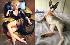 I want that cat!