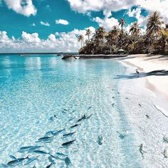 Travel Discover Reisen Halaveli Island Malediven Landscaping Lessons-Proper Placement Of Trees In Landscape Dream Vacations Vacation Spots Greece Vacation Greece Travel Vacation Places Vacation Meme Vacation Deals Vacation Resorts All Inclusive Resorts Beach Aesthetic, Travel Aesthetic, Summer Aesthetic, Blue Aesthetic, Water Aesthetic, Aesthetic Photo, Dream Vacations, Vacation Spots, Greece Vacation