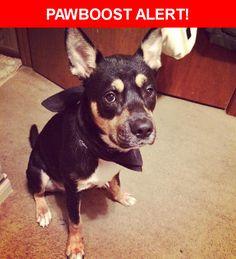 Please spread the word! Duke was last seen in Dallas, TX 75231.