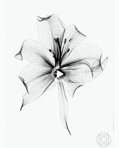 Tatoo Flowers, Wildflowers Tattoo, Small Flower Tattoos, Flower Tattoo Designs, Small Tattoos, Diy Tattoo, Form Tattoo, Shape Tattoo, Tattoo Ideas