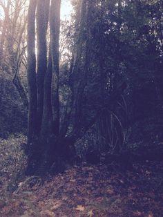 So many beautiful trees!