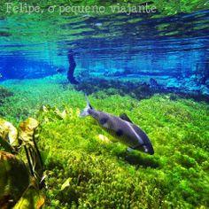 Felipe, o pequeno viajante: Flutuação no Aquário Natural de Bonito MS - o que você precisa saber