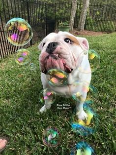 im forever blowing bubbles