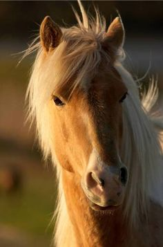 Horses are such beautiful creatures!