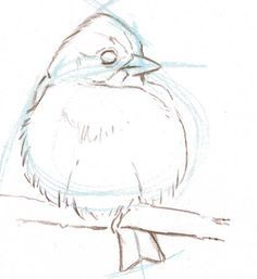 From: The Laws Guide to Drawing Birds - John Muir Laws Informations About From: The Laws Guide to Dr Bird Drawings, Animal Drawings, Cool Drawings, Drawing Sketches, Drawing Birds, Drawing Guide, Sketching, Drawing Ideas, Sketch Art