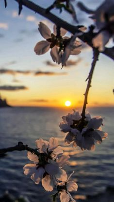 Wallpaper Tutorial and Ideas Sunset Wallpaper, Iphone Background Wallpaper, Aesthetic Iphone Wallpaper, Aesthetic Wallpapers, Beautiful Flowers Wallpapers, Beautiful Nature Wallpaper, Pretty Wallpapers, Phone Wallpapers, Photo Deco