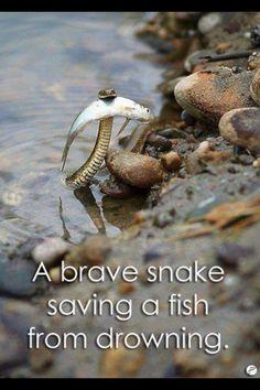 Haha the snake tried.