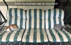 Animals have their own funny side, and here in funny animal picdump of the day - 176 you will find 22 funny animal pictures. Funny Animal Images, Funny Animal Quotes, Cute Funny Animals, Animal Memes, Funny Cute, Funny Pictures, Hilarious, Daily Funny, Animals And Pets