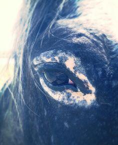 My appoloosa horse