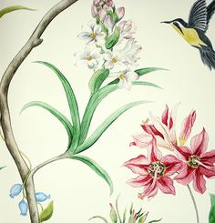 Clementine Wallpaper A printed wallpaper featuring charcoal and yellow hummingbirds, blue butterflies and flowing exotic flora with pink flowers on a cream background.