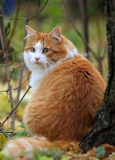 Don't mind me just here away from drama and nonsense 😹😹😹 - Katzen - Hunde Pretty Cats, Beautiful Cats, Animals Beautiful, Cute Animals, I Love Cats, Crazy Cats, Animal Gato, Cute Cats Photos, Orange Tabby Cats