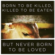 WE love you. #vegan if only they could speak