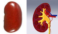 kidney_beans