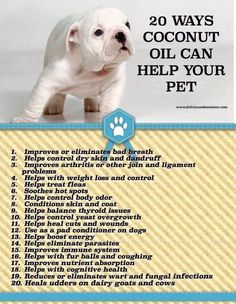 Coconut oil for pet health. I add coconut oil to my dogs food daily. They love it and I have seen a huge improvement and not only in their coat/skin. Yorkies, Pomeranians, I Love Dogs, Puppy Love, Gato Gif, Coconut Oil For Dogs, Fu Dog, Oils For Dogs, Pet Health