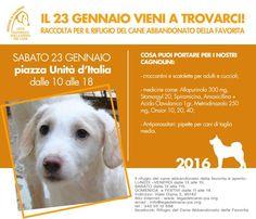 23/1 raccolta di viveri e farmaci per la #LegadelCane di #Palermo