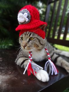 Cat Hat Cat Costume  Cats and Small Dogs   The by iheartneedlework, $20.00