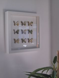 butterflies by GosiaandHelena on Etsy, Home Decor Wall Art, Butterflies, Wedding Gifts, Presents, Collage, 3d, Frame, Etsy, Room Wall Decor