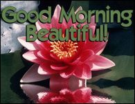 Good Morning Pictures, Images, Graphics, Comments and Photo Quotes Happy Saturday Images, Free Good Morning Images, Good Morning Picture, Morning Pictures, Good Morning Beautiful Flowers, Beautiful Flowers Images, Flower Images, Amazing Flowers, Nice Flower