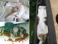 Wenn Katzen müde sind (und das sind sie bis zu 16 Stunden am Tag), dann ist ihnen egal, wo sie schlummern und was um sie herum noch so passiert. 😀 Diese 35 Katzen sind der beste Beweis dafür. Zu süß, oder?! 😀