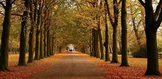Nature Autumn in Park
