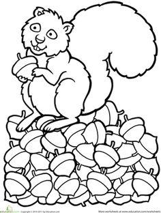 Color The Squirrel
