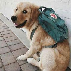 daa074fd1 GO TO SCHOOL #kanken #fjällräven #dogs #joyfull #happyness #greece  #vacation #greeksummer. KANKEN BACKPACK · KANKEN MINI