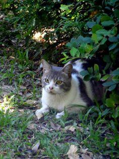 Les presentamos en fotos parte de nuestra labor voluntaria que hacemos todos los días. En nuestras recorridas alimentamos, chequeamos que los gatos están sanos, hacemos censos, llevamos al vete, mimamos y buscamos ronroneos siempre! Si querés ser parte de estas historias adoptando, transitando, donando o siendo voluntario escribinos a adopciones.botanico[@]gmail.com y comenzá a ¡HACER FELIZ A MUCHOS GATOS!