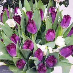 """679 """"Μου αρέσει!"""", 10 σχόλια - FlowerLove 🍃🌹🍃⚘🍃🥀🍃🌸 (@flowerpassionflower) στο Instagram: """"🌷nice evening my friends🌷 #9vaga_w41tulips #9vaga9 #inspiring_shot #ip_blossoms_member…"""""""