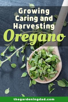 Learn easy and quick tips for Growing Harvesting Learn easy and quick tips for Growing Harvesting Indoor Gardening Supplies, Gardening Tips, Herb Garden Design, Kitchen Herbs, Flowers Perennials, Grow Your Own Food, Growing Herbs, Medicinal Herbs, Fresh Herbs