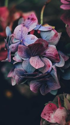 Get Wallpaper: http://bit.ly/1VDQaTi nb94-flower-rainbow-color-dark via http://iPhone6papers.com - Wallpapers for iPhone6 & plus