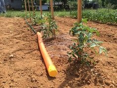How to Water Plants with a Pool Noodle - A Little Craft In Your Day #LetsGro, #LifeStartsHere, #IfItWatersNowItFeeds