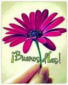 Buenos días! Flores