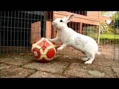30 Bunny Tricks!! - YouTube