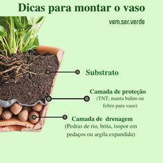 Beef, Plants, Mini, How To Plan A Vegetable Garden, River Rocks, Indoor Gardening, Gardens, Gardening Tips, Ornamental Plants