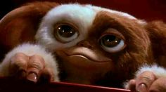 This pick is a shot of Gizmo from Gremlins It was sent to me by a friend. He is cute, Gizmo Gremlins Gizmo, Les Gremlins, Madonna, Science Fiction, Les Gifs, Fanart, Christmas Shows, Weird Creatures, Fantasy Creatures