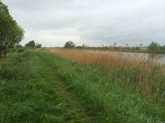 Hollandse polder 2014, omgeving Schipluiden.