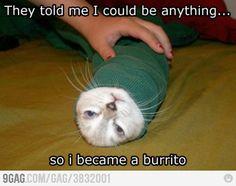 Burrito! Burrito! Burrito!