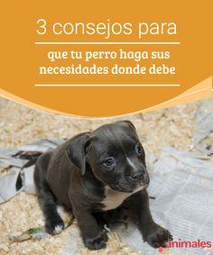 3 consejos para que tu perro haga sus necesidades A continuación te vamos a dar 3 consejos para que tu perro haga sus necesidades donde debe. Hay que establecer horarios, premiarlo y corregirlo.
